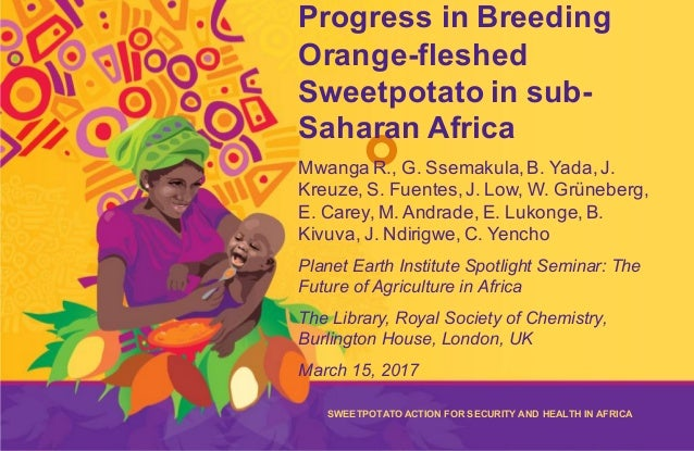 The Sweetpotato Action for Security and Health in Africa (SASHA) is a five-year initiative designed to improve the food se...