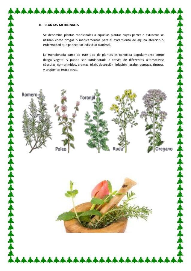 Utilidad de las plantas for Tres plantas ornamentales