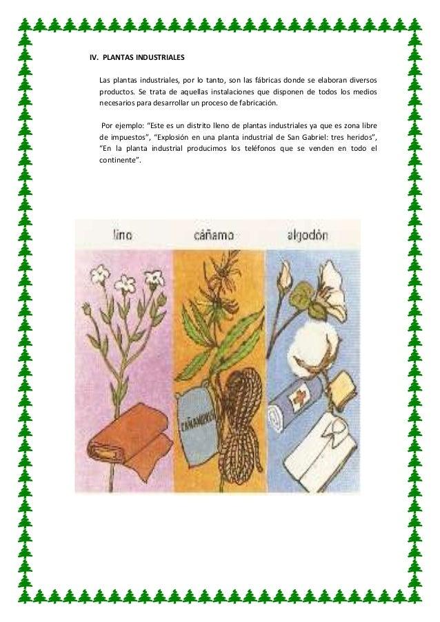 Utilidad de las plantas for 5 nombres de plantas ornamentales