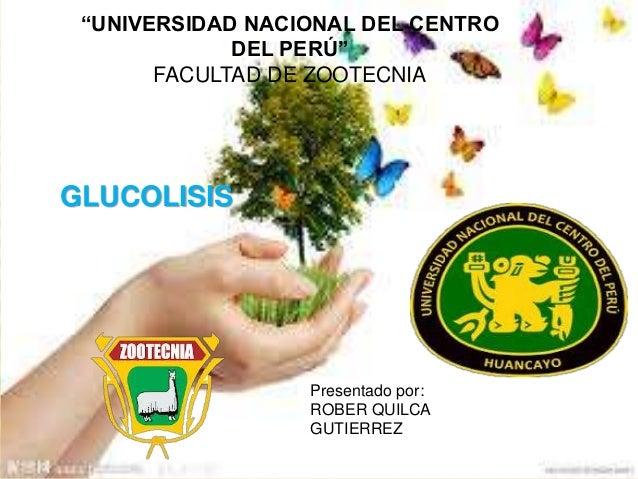 """""""UNIVERSIDAD NACIONAL DEL CENTRO DEL PERÚ"""" FACULTAD DE ZOOTECNIA Presentado por: ROBER QUILCA GUTIERREZ GLUCOLISIS"""