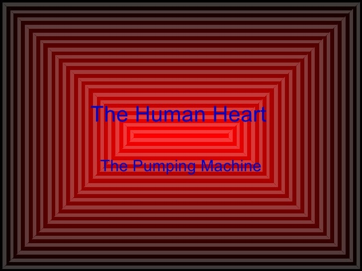 The Human Heart The Pumping Machine