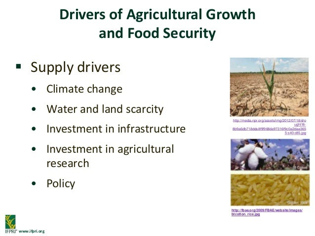 food and agricultural challenges By 2050, a global population of 98 billion will demand 70% more food than   the system initiative on shaping the future of food security and agriculture  aims to:  this report aims to challenge global leaders to think in new ways  about what.