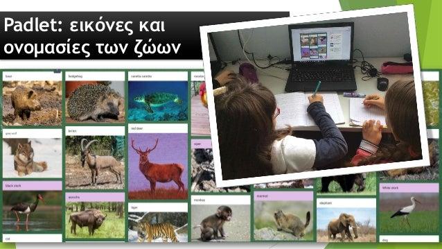 Βίντεο: πληροφορίες για τα ζώα (h5p.org)
