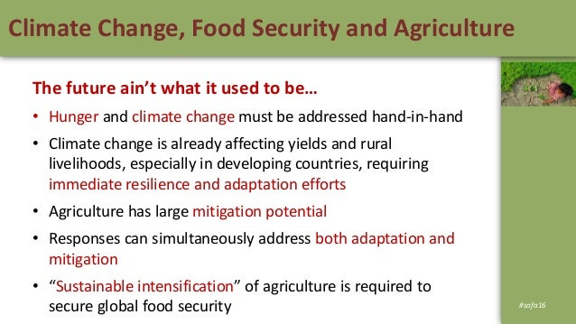 Global Food Security Under Climate Change Essay Uuuno Climatefood Essay Gq Hot Hungry And Starved Of Investment  Supporting Smallholders To Build A Climateresilient Agricultural Sector In  Southern  Article Review Services also Persuasive Essay Thesis Statement Examples  Cheap Do My Assignemnt