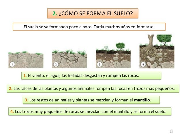 Rocas y minerales for Como se forma y desarrolla el suelo