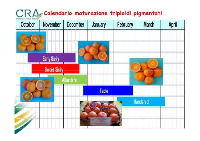 Calendario Concimazione Agrumi.Calendario Concimazione Agrumi Calendario 2020