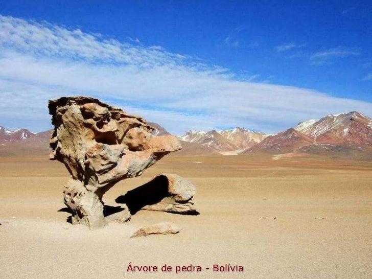 Árvore de pedra - Bolívia
