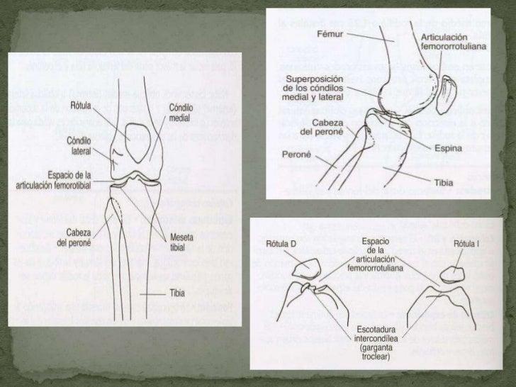 Proyecciones de Rodilla y Tobillo en Radiología Convencional  Slide 2