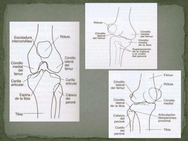 Proyecciones de Rodilla y Tobillo en Radiología Convencional  Slide 3