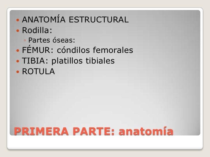 PRIMERA PARTE: anatomía<br />ANATOMÍA ESTRUCTURAL<br />Rodilla: <br />Partes óseas: <br />FÉMUR: cóndilos femorales<br />T...