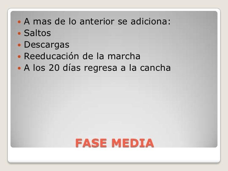 FASE MEDIA<br />A mas de lo anterior se adiciona:<br />Saltos<br />Descargas<br />Reeducación de la marcha<br />A los 20 d...