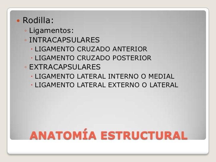 ANATOMÍA ESTRUCTURAL<br />Rodilla:<br />Ligamentos: <br />INTRACAPSULARES<br />LIGAMENTO CRUZADO ANTERIOR<br />LIGAMENTO C...
