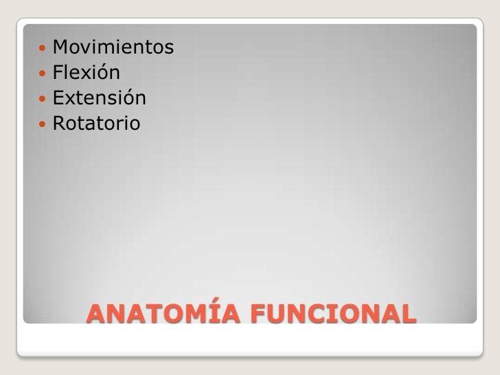 ANATOMÍA FUNCIONAL<br />Movimientos <br />Flexión<br />Extensión<br />Rotatorio<br />