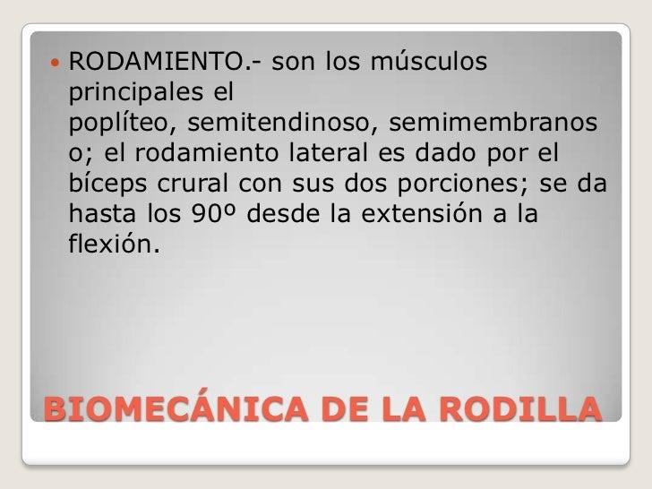 BIOMECÁNICA DE LA RODILLA<br />RODAMIENTO.- son los músculos principales el poplíteo, semitendinoso, semimembranoso; el ro...