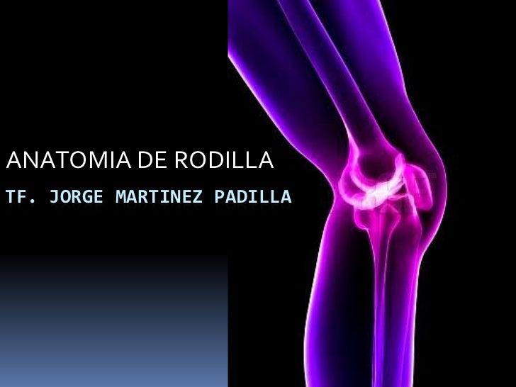 ANATOMIA DE RODILLATF. JORGE MARTINEZ PADILLA