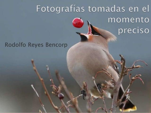 Rodolfo Reyes Bencorp