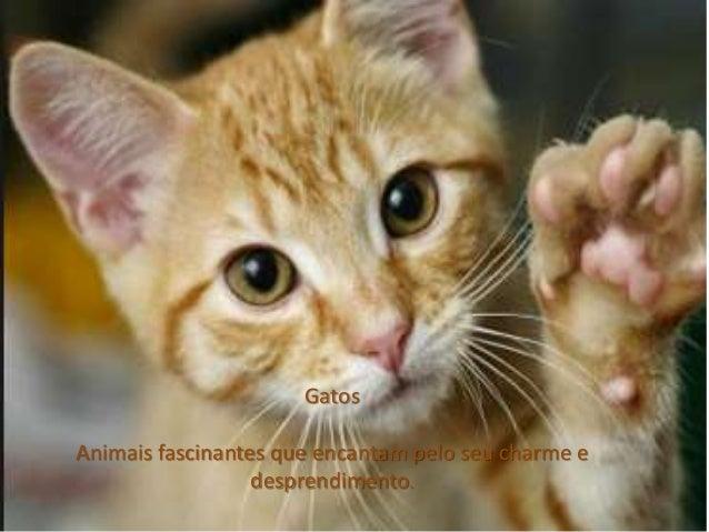 Gatos  Animais fascinantes que encantam pelo seu charme e  desprendimento.