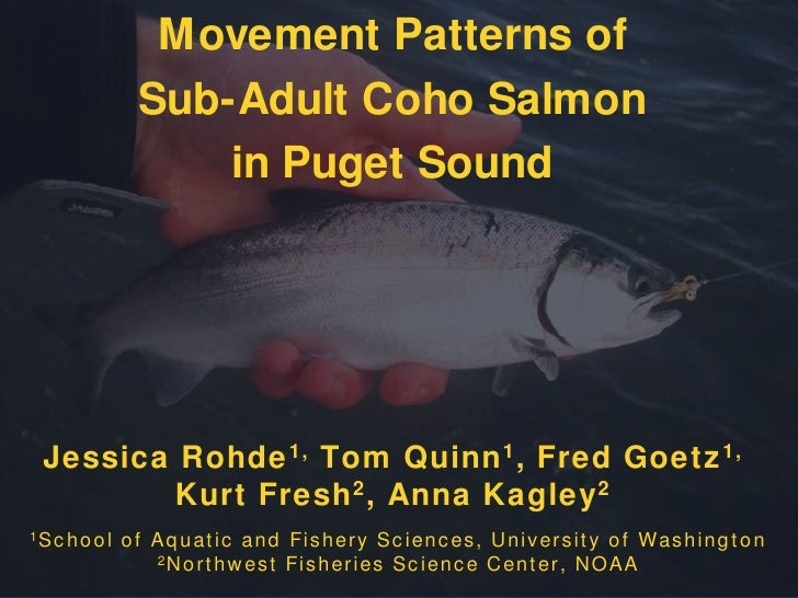 Movement Patternsof <br />Sub-Adult Coho Salmon <br />in Puget Sound<br />Jessica Rohde1, Tom Quinn1, Fred Goetz1,Kurt Fre...