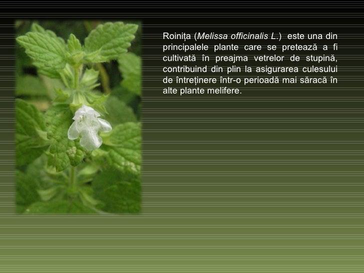 Roiniţa   ( Melissa officinalis L .)   este una din principalele plante care se pretează a fi cultivată în preajma vetrelo...