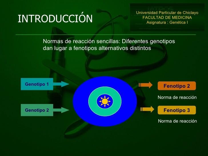 INTRODUCCIÓN Universidad Particular de Chiclayo FACULTAD DE MEDICINA Asignatura : Genética I Fenotipo 2 Fenotipo 3 Genotip...