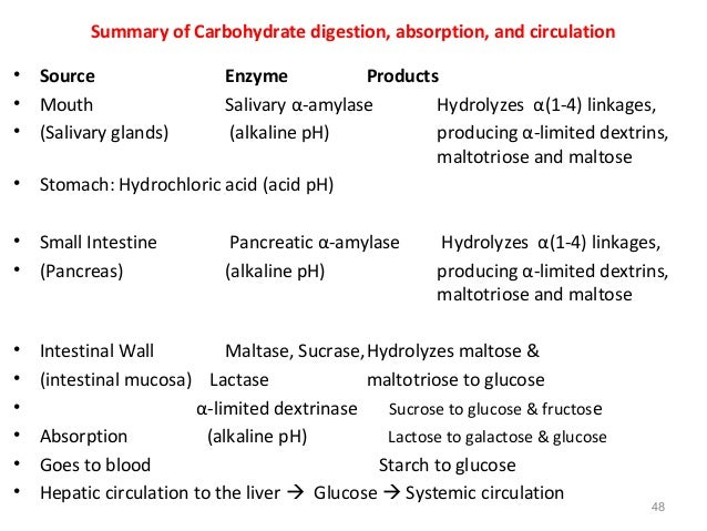 Digestive Enzymes of the Human Body