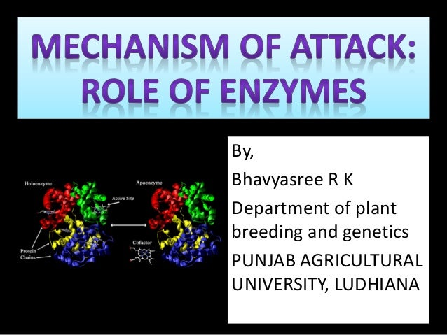 role of enzymes in plants