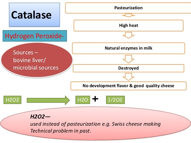enzymes in the dairy industry Enzymes for anaerobic digestion ark agriculture is delighted to introduce a new enzyme product to the anaerobic digestion industry called optimash .