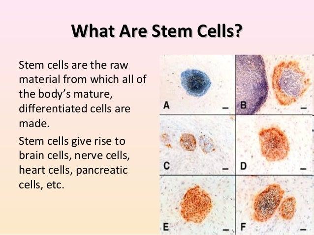 Role of Eye Bank Beyond The Cornea - Stem Cells