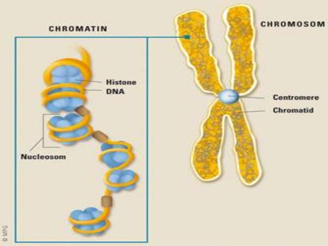 Role of dna and rna in protein synthesis