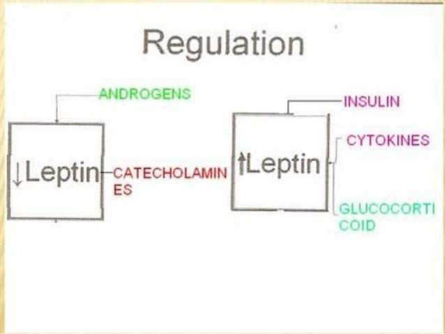 Gastrointestinal regulation of food intake