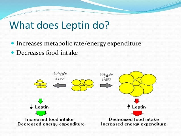 Role of Leptin in Obesity