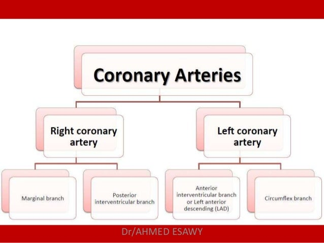 Role Of Mdct In Coronary Artery Part 1 Ct Anatomy Dr Ahmed Esawy