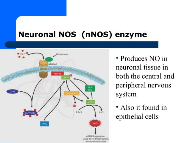 role for nitric oxide in the immune system biology essay Biology chapter 45: hormones and the which example below is a role of nitric oxide is an autoimmune disease in which the immune system attacks beta.