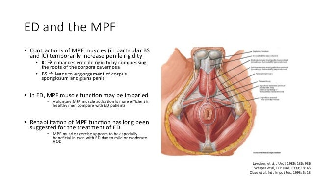 Role of pelvic floor in male sexual dysfunction