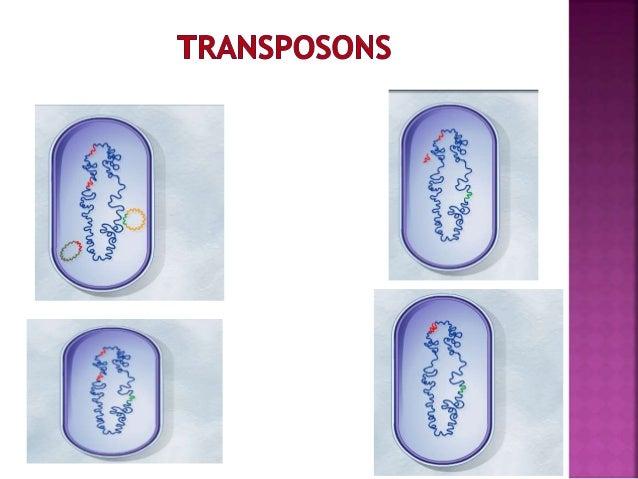 Environment Cytoplasm Porin Efflux System Pump Efflux System Exit Portal Linker Lipoprotein