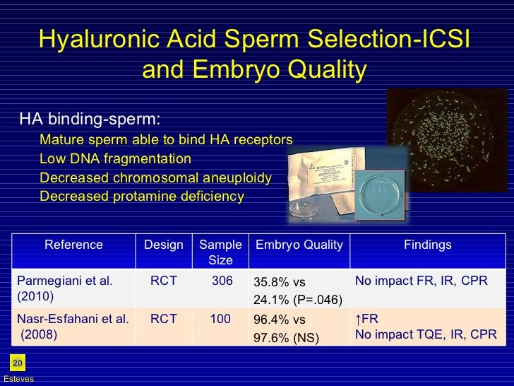 Hyaluronic Acid Sperm Selection-ICSI and Embryo Quality <ul><li>HA binding-sperm: </li></ul><ul><ul><li>Mature sperm able ...