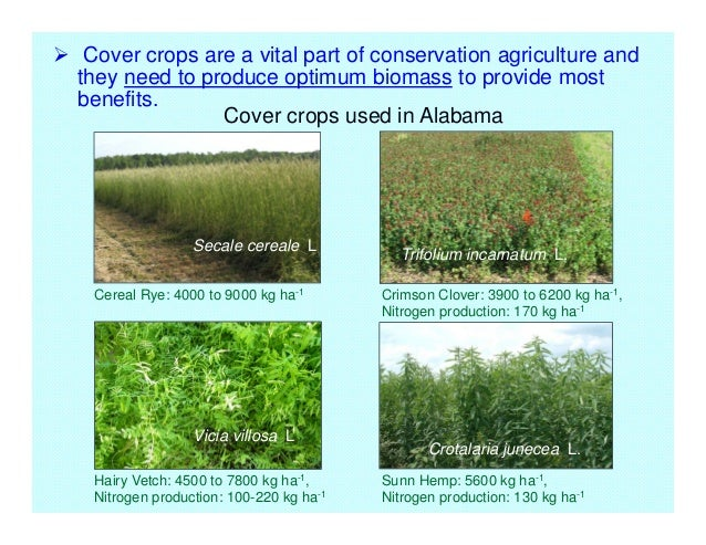 Roller Crimper Designs For Cover Crops