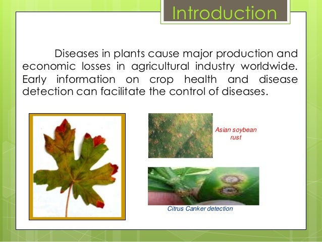 Plant Disease Detection Using I T