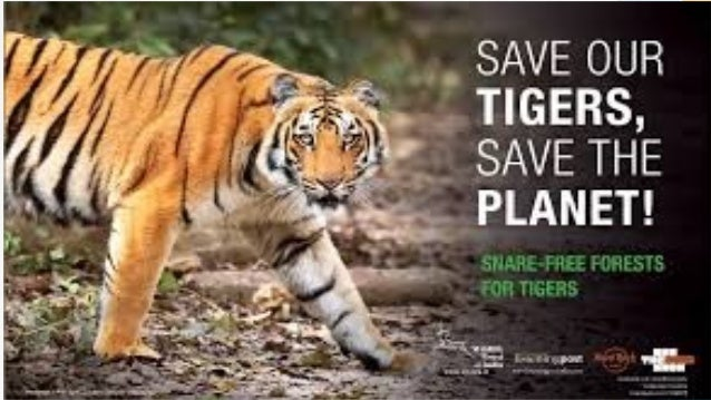 save tiger for class IX
