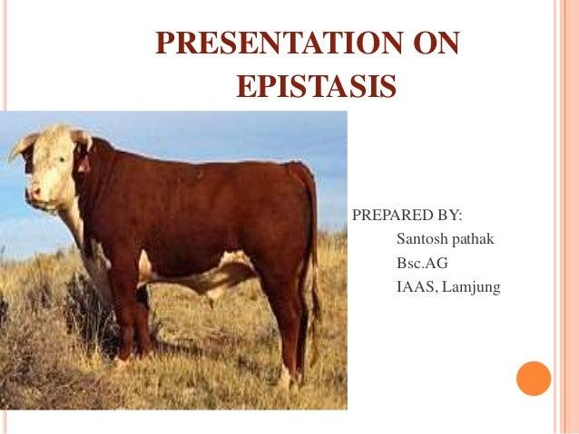 PRESENTATION ON EPISTASIS PREPARED BY: Santosh pathak Bsc.AG IAAS, Lamjung