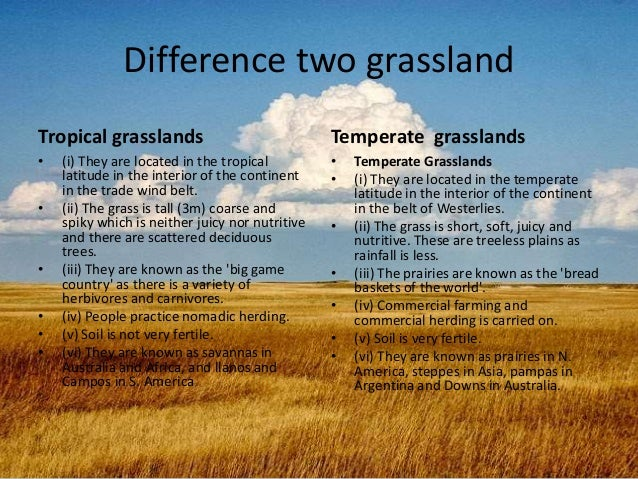 tropical rainforests vs tropical grasslands Grasslands and savannas are related (and overlapping) biomes most extensive in tropical and temperate latitudes while definitions vary, grassland generally refers to a grass-dominated landscape with few if any woody plants while  savannas are grassy expanses with scattered trees or shrubs.
