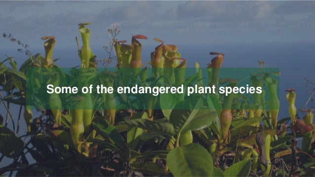 Your Logo or Name Here 17 Some of the endangered plant species