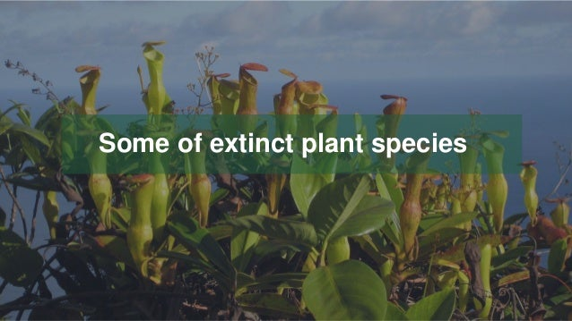 Your Logo or Name Here 19 Some of extinct plant species
