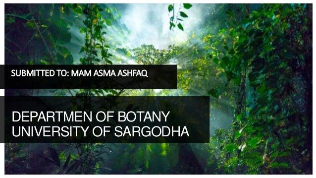 SUBMITTED TO: MAM ASMA ASHFAQ DEPARTMEN OF BOTANY UNIVERSITY OF SARGODHA