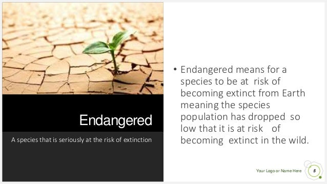 Your Logo or Name Here Endangered A species that is seriously at the risk of extinction 5 • Endangered means for a species...