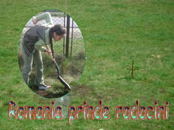 Romania prinde radacini