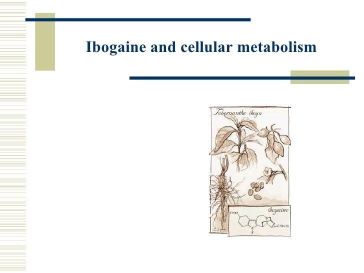Ibogaine and cellular metabolism