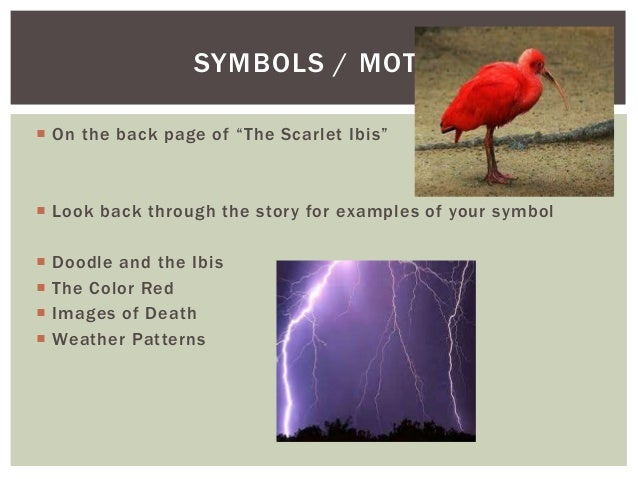 essays on the scarlet ibis by james hurst Symbols in the scarlet ibis prompt: write a five-paragraph essay about the symbols used by the author in the scarlet ibis your essay should support this thesis required thesis: in the scarlet ibis, james hurst uses _____ essay assignment: symbols in the scarlet.