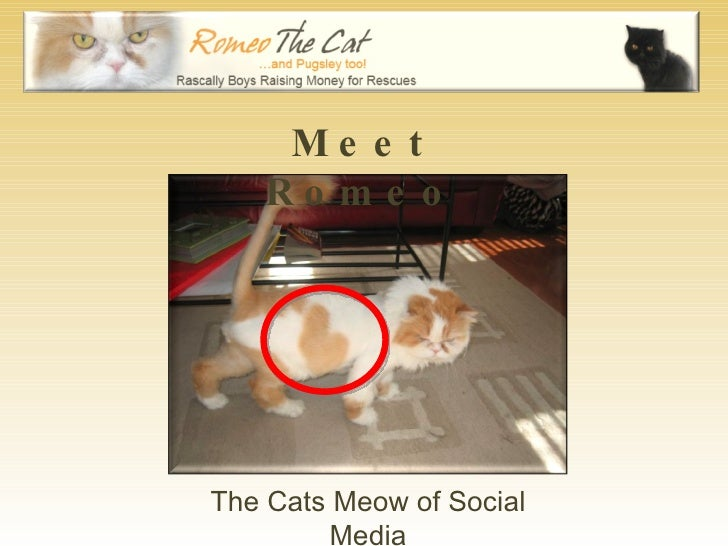 Meet Romeo The Cats Meow of Social Media