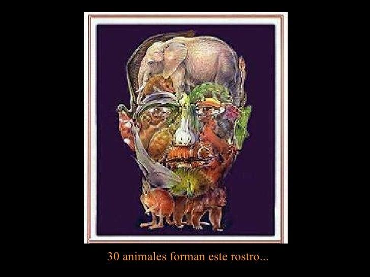 30 animales forman este rostro...